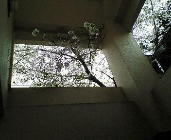 桜館のCD 005