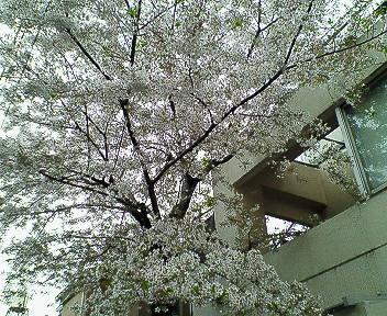 桜館のCD 009